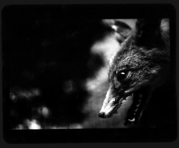 Джакомо Брунелли и«другие» животные. Изображение № 12.