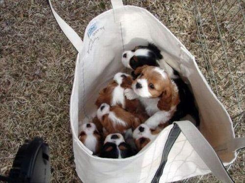 Puppy, puppy, 1-2-3!. Изображение № 16.