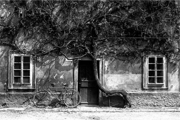 Фотограф: Stanko Abadzic. Изображение № 11.