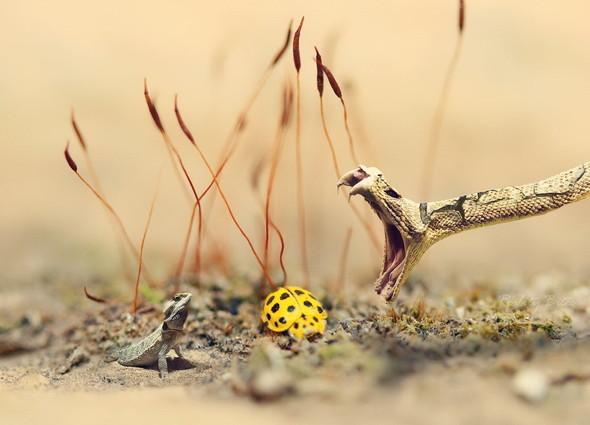 Лучшие новые снимки от National Geographic. Изображение № 22.