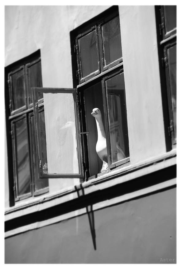 Солнечный Копенгаген. Изображение № 9.