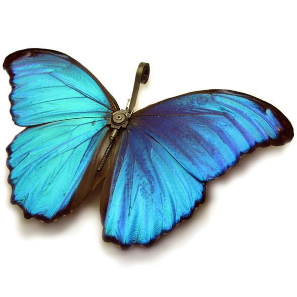 Стимпанк насекомые от Mike Libby. Изображение № 1.