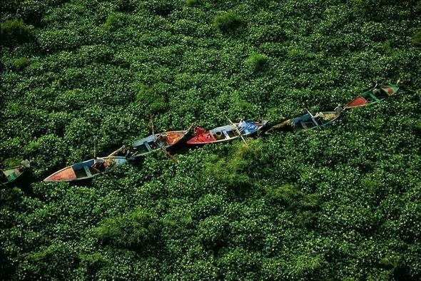 Заросли гиацинта на Ниле, Египет. Изображение № 5.