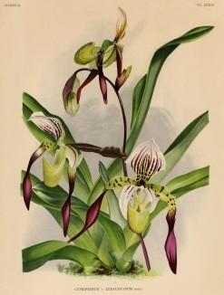 Глянцевые орхидеи: слухи, сплетни, комментарии. Изображение № 9.