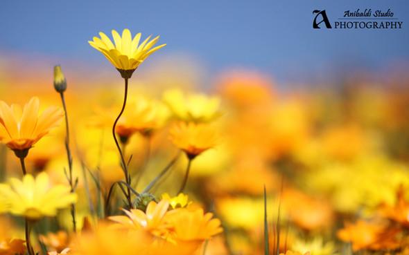 Весна идет! Создаем весеннее настроение. Изображение № 3.