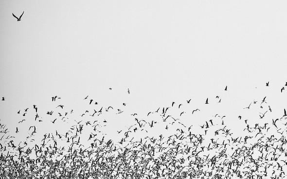 Пронзаясь махом крыльев - non stop. Изображение № 21.