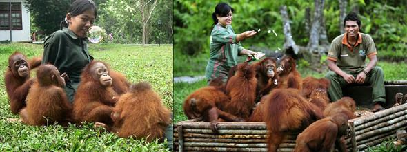 Лоун Дрошер-Нилсен и её обезьянки. Изображение № 5.