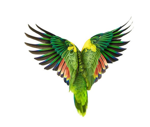 Божественные птицы Andrew Zuckerman. Изображение № 10.