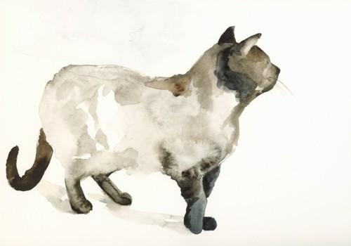 Мудборд: Таня Пёникер, художница. Изображение № 228.