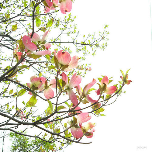 Лёгкость Yoshiko. Изображение № 39.