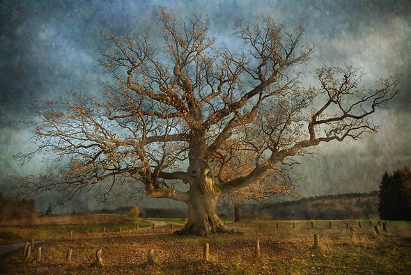 Томас Гаук. Пейзажи на перекрестке времен. Изображение № 3.