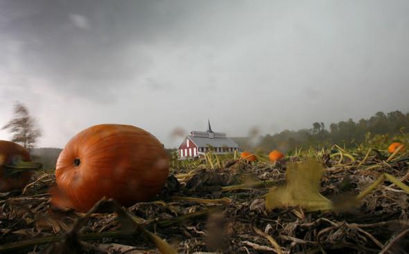 Осень постучала в двери. Изображение № 33.