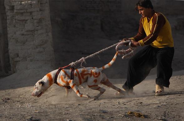 Афганистан. Военная фотография. Изображение № 240.