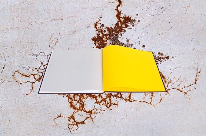 Фотографы Synchrodogs выпустили книгу. Изображение № 2.