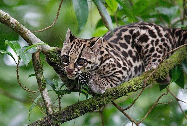 Как учёные находят новых животных: 10 недавно открытых видов. Изображение № 8.