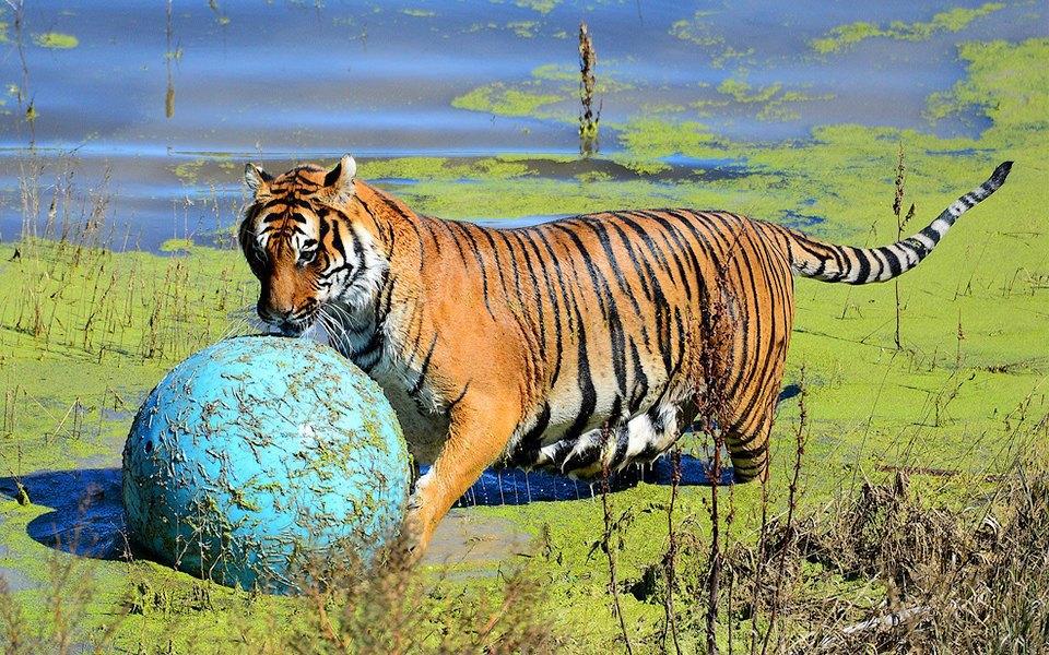 Эпоха истребления: 7 разновидностей животных, которых собрались уничтожить. Изображение № 12.