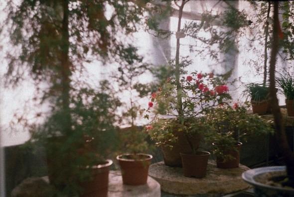 Прогулка по Ботаническому саду. Изображение № 8.