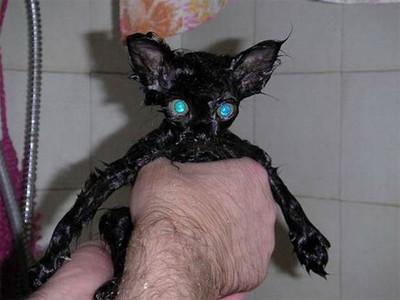 50 животных, которые ненавидят мыться. Изображение № 13.