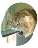 Некролог: Кот умер! Даздравствует кот!. Изображение № 9.