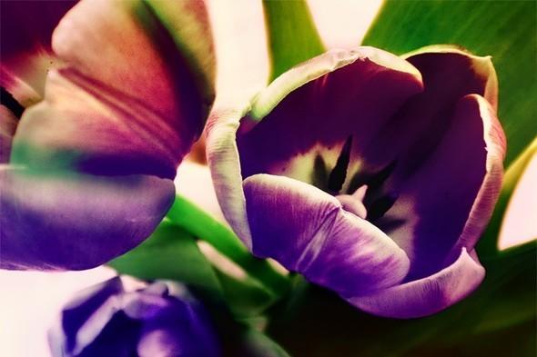 Время цветения. Изображение № 8.