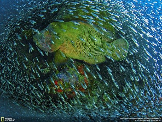 Фотограф: Christian Miller / Место: побережье Австралии. Изображение № 14.