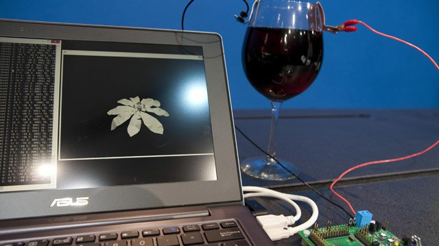 Intel представил процессор, работающий на вине. Изображение № 1.