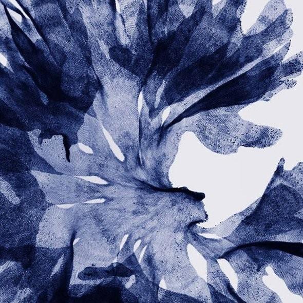 Изображение 14. Цветы под рентгеном.. Изображение № 13.