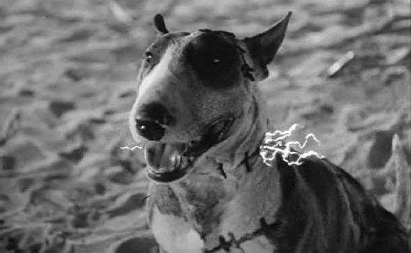 Шитый черными нитками, но не теряющий жизнелюбия Спарки. «Франкенвини»1984. Изображение №36.