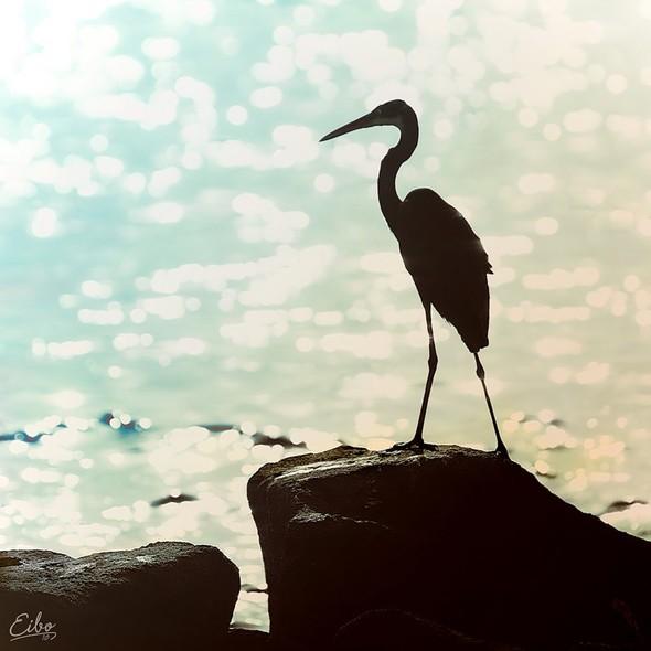 Более 40 потрясающих фотографий от Eibo. Изображение № 21.