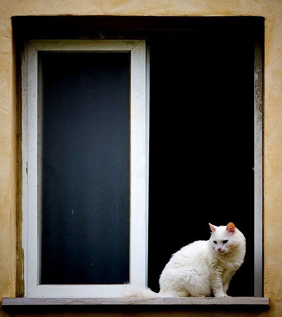 Cat. Window. Изображение № 6.