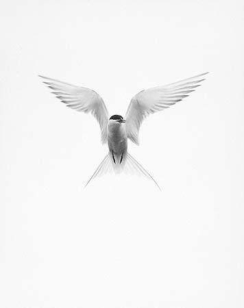 Элиот Портер: фотограф раскрасивший мир. Изображение № 18.
