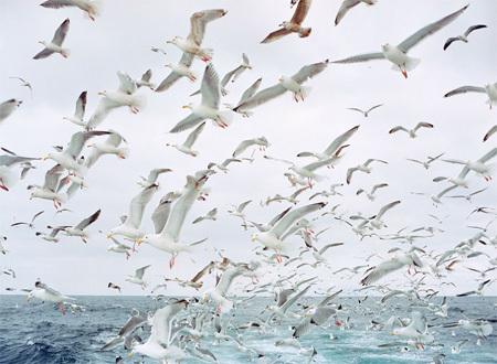 Каково быть рыболовом вАрктике. Изображение № 8.