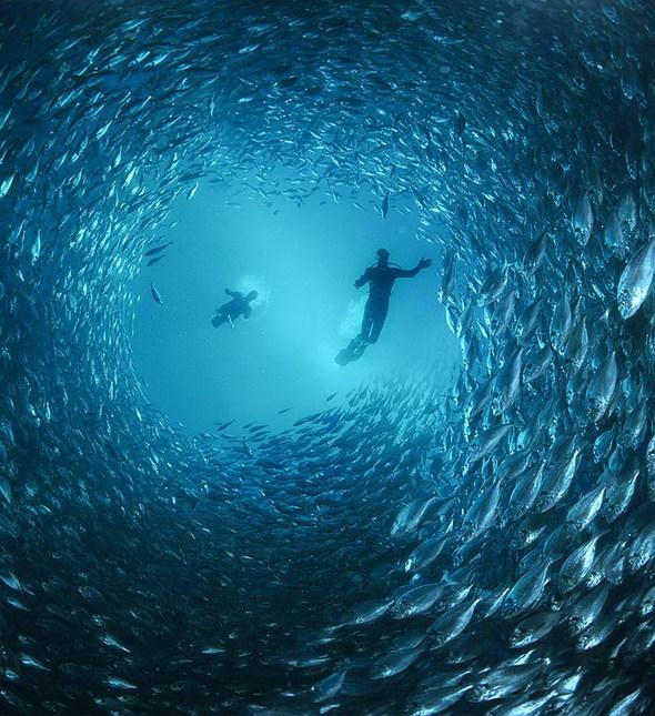 Подводная «художница» – Зена Холлоуэй. Изображение № 19.