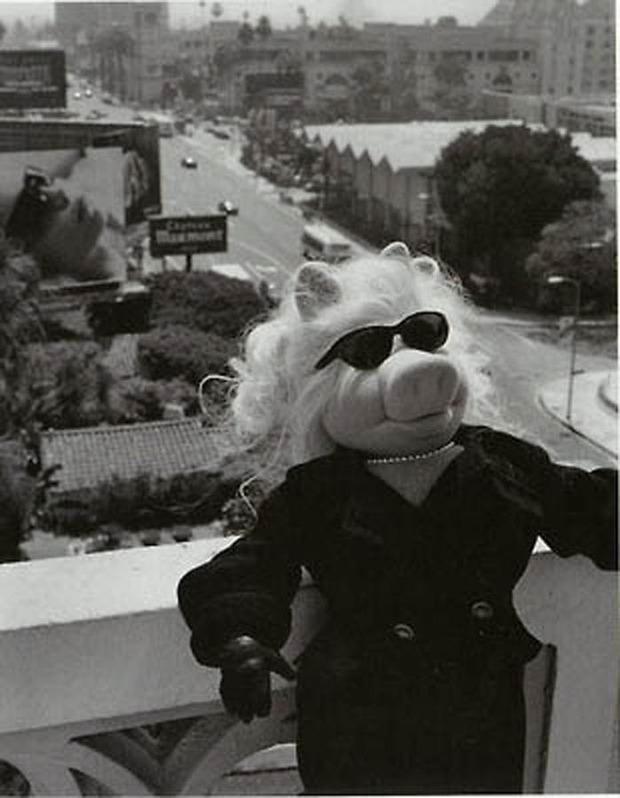Мисс Пигги - Самая модная свинка мира.. Изображение № 8.