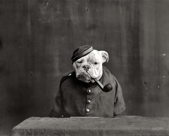 Фотографии с животными, начало прошлого века. Изображение № 4.