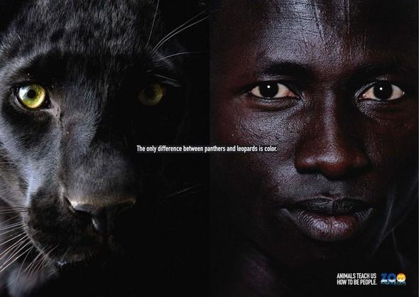 Животные учат нас быть людьми. Изображение № 3.