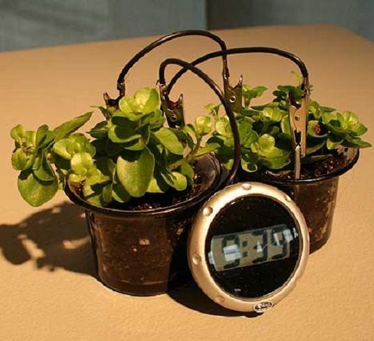 Уникальные биочасы: умрут растения – погибнет время. Изображение № 3.