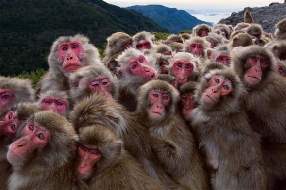 Лучшие снимки от National Geographic. Изображение № 9.