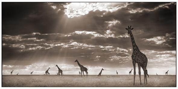 МояАфрика. Изображение № 14.