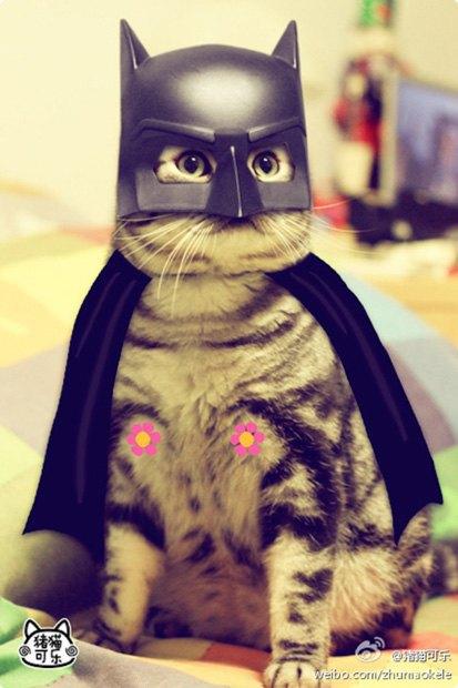 Котик косплеит супергероев. Изображение № 2.