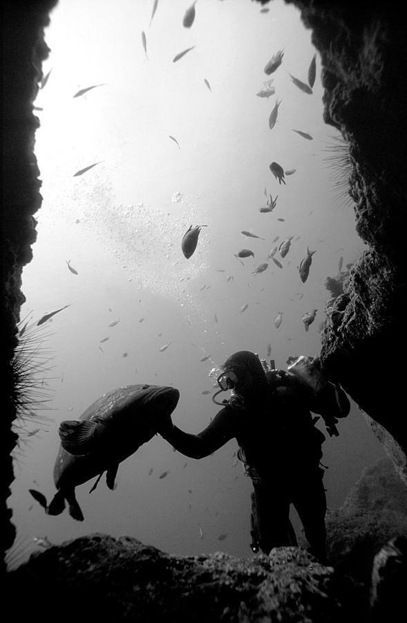 Подводная жизнь глазами фотографа Карлоса Франко. Изображение № 10.