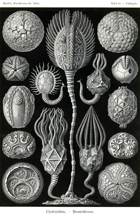 Причудливые формы природы. Изображение № 42.