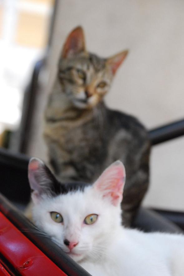 Котики и авто. Изображение № 10.