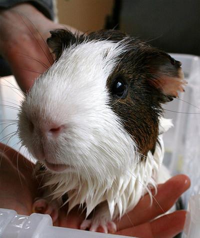 50 животных, которые ненавидят мыться. Изображение № 36.