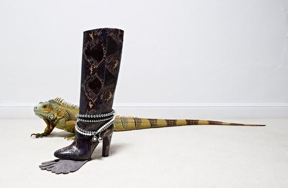 Съёмка: Животные в Viva! Moda. Изображение № 6.