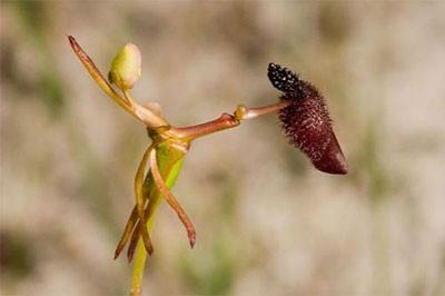 Необычные растения. Изображение № 6.