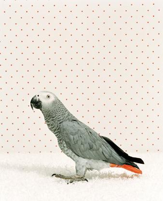 Животноводство отCatherine Ledner. Изображение № 29.