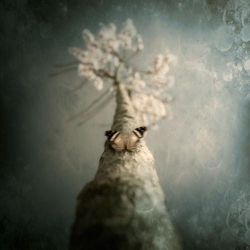 Luis beltran. красота снов. Изображение № 12.