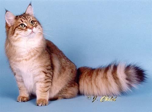 Кошки в интерьере. Изображение № 12.