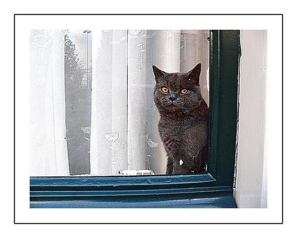 Cat. Window. Изображение № 8.